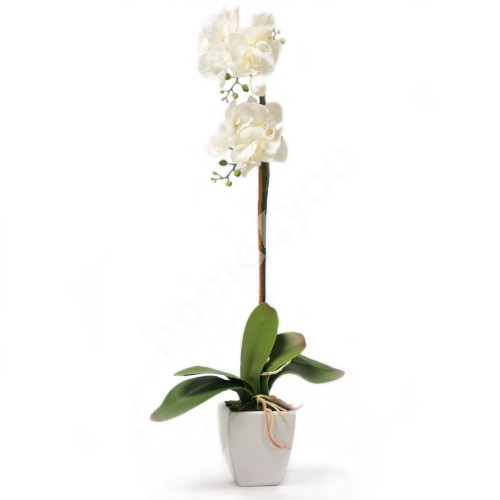 White orchid with 1 branch, H75cm, white pot