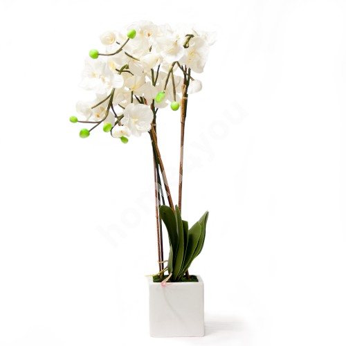 White orchid with 4 long branch, H88cm, white pot