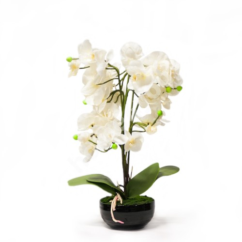 White orchid with 3 branch, H48cm, black pot
