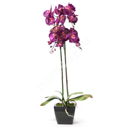 Purple orchid with 2 double branch, H78cm, black pot
