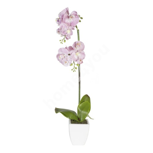 Light pink orchid with 1 double branch, H75cm, white pot