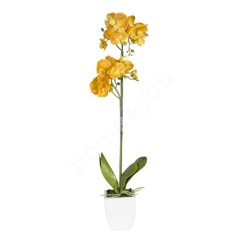 Yellow orchid with 1 double branch, H75cm, white pot