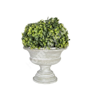Roheline põõsas BUXUS potis, H27cm