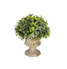 Roheline põõsas BUXUS potis, H20cm