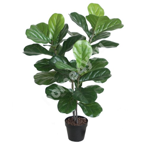 Kunstpuu FIDDLE LEAF, H100cm, 2 tüvega, must pott