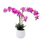 Lilla orhidee 3 oksaga IN GARDEN, H55cm, valge pott